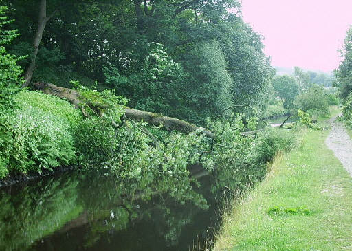 Fallen tree above Pinnel Lock, looking towards Hollins Lock. Photo: Steve Cross